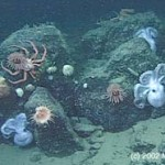 ARCHIVE: 25 Things You Should Know About the Deep Sea: #4 The Deep Sea Has Extremely High Species Diversity
