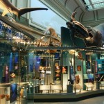 New Hall of the Oceans at the Smithsonian