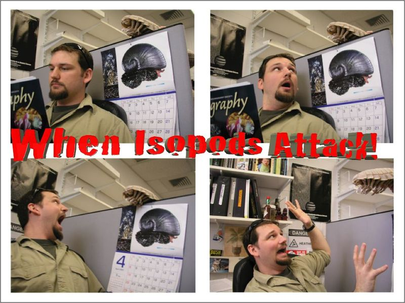When_isopods_attack