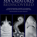 Sea Creatures Rediscovered
