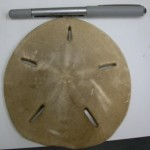 The Sand Dollar Love Shack: A Special Echinoblog to DSN