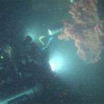 Friday deep-sea picture: Deepworkers find Primnoa