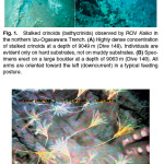 The Deepest Crinoids