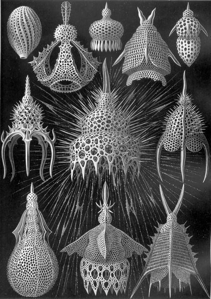Radiolarians from Kunstformen der Natur (1904), plate 31 from Ernst Haeckel available on Wikimedia Commons