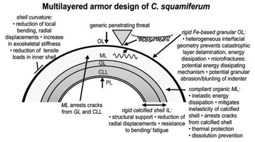 Instructions for building your very own super snail. From Yao et al. 2010