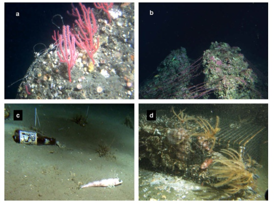 Fig. 5. Examples of debris items observed from the Delta submersible during deep-water surveys on the seafloor off central and southern California: (a) monofilament fishing line in gorgonian corals off central California at 95 m (photo by M. Yoklavich); (b) gill net snagged on rock off southern California at 80 m (photo by D. Schroeder); (c) beer bottle with shortspine combfish off southern California at 182 m (photo by L. Snook); (d) derelict spot prawn trap continuing to capture crabs off southern California at 247 m (photo by M. Love).