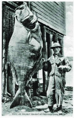 Ginormous halibut from Cousteau Society's World Ocean Census. (click image)
