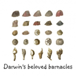 Ex Omnia Conchis: Darwin and His Beloved Barnacles