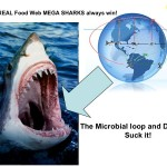 The REAL food web