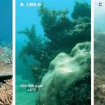 Not Good Enough: Copenhagen Accord May Doom Coral Reefs