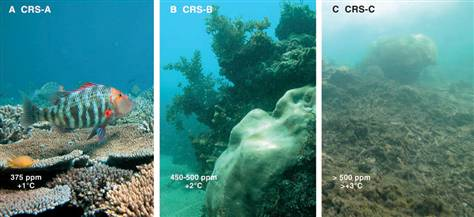 The left image represents an intact system at current CO2 levels; the center image shows coral decay with increased CO2; and the right image shows a devastated system with even higher CO2 emissions. O. Hoegh-Guldberg, et al (2007) Coral reefs under rapid climate change and ocean acidification, Science, 318(5857), p. 1741