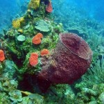 Marine Invertebrate Diversity Goes With The Flow
