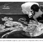 From The Editor's Desk: Giant Squid=Awesomesauce