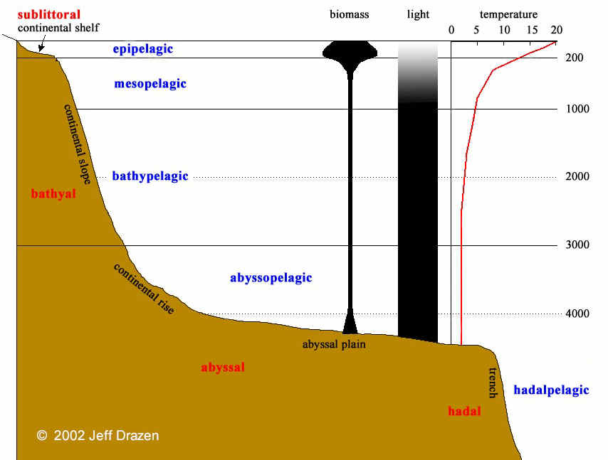 deep sea diagram deep sea news diagram for seagrass as shoals for waves deep sea diagram