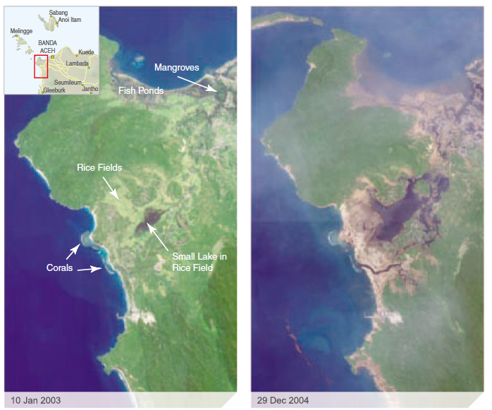 Figure from UNEP: These images show a combination of a rocky, hilly headland along with a small river delta and swampy coastal strip. A low-lying wetland area connects the northern and western ocean fronts. An integration of natural and agricultural ecosystems operating prior to the tsunami combined rice cultivation, and fish/shrimp ponds (tambak), alongside natural delta mangrove forests and wetlands. Coastal forests and onshore reefs are also present. The effect of the tsunami is clearly evident. It scoured out the low lying delta land, destroyed fish ponds and removed mangrove cover. Volumes of soil and silt have evidently been carried out to sea expanding the area of the small lake by a factor of approximately 10. There has been removal of the sandy beaches (important in some locations for turtle nesting) and deposition of silt or mud on the reef. Apparently minor effects on the integrity of the rocky vegetated shoreline surrounding the headland are likely due to the resilient nature of the substrata, as well as dense natural vegetation cover and the sloping nature of the shore.