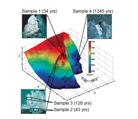 Vents representing diverse ages, sampled at the Lost City Hydrothermal Field (Brazelton et al. 2010)