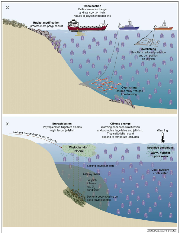 Schematic detailing the potential causes of jellyfish outbreaks (Figure from Richardson et al., 2009 in TREE)