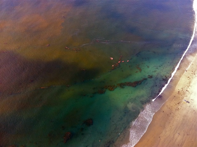 Red tide off La Jolla Shores