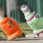 Friday Penguin KEWTNISSS!1!!