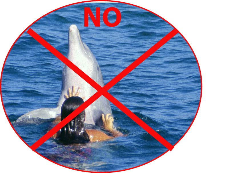 No, you cannot hug the dolphins. Original photo by Stefan Thiesen.