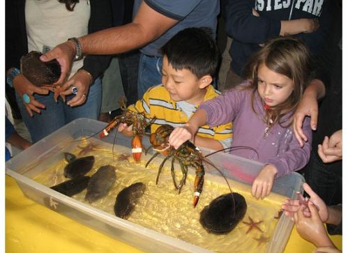 kids-touch-tank