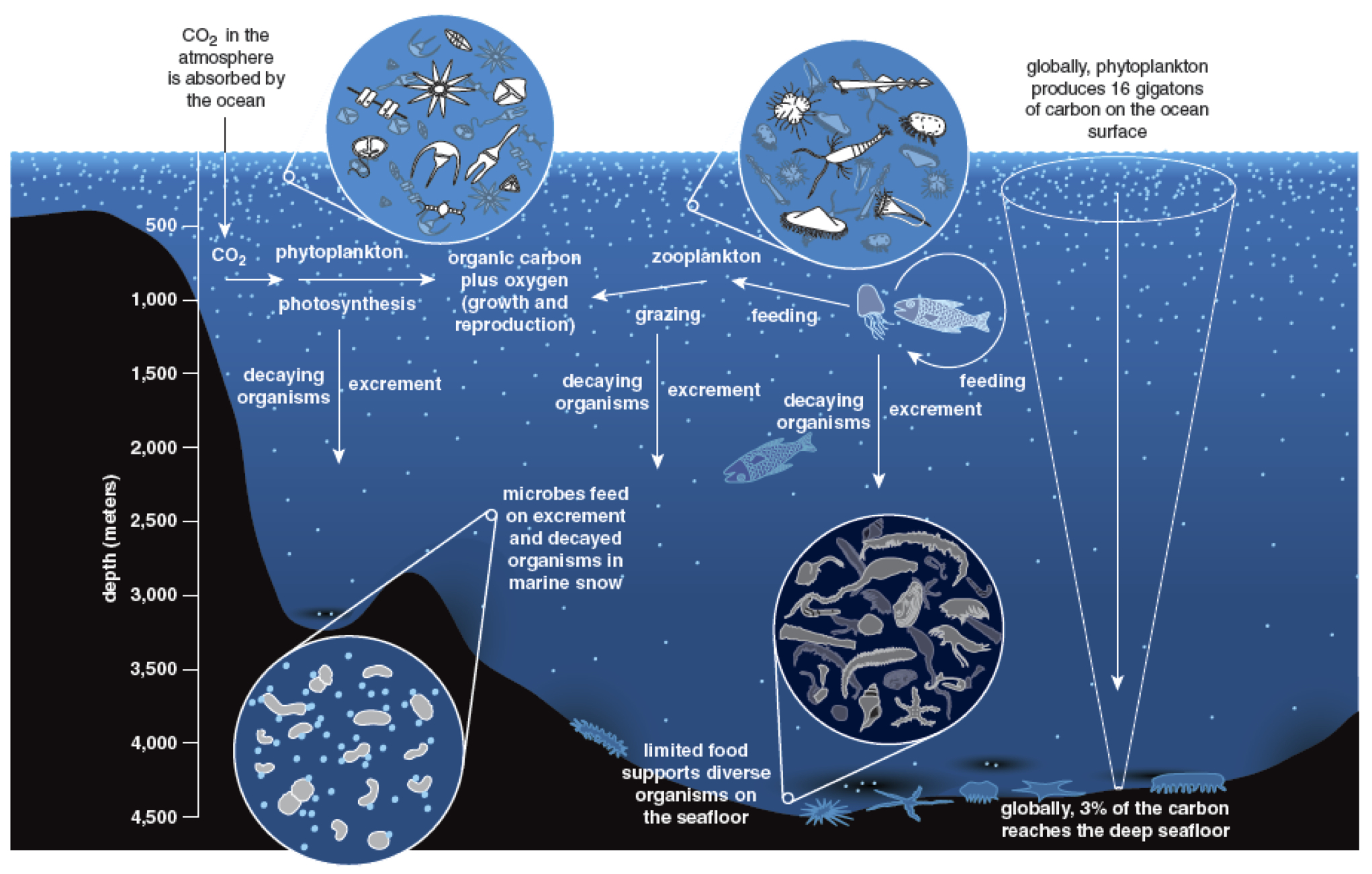 the environmental changes faced by deep sea organisms Animals are pretty remarkable – we can find them in virtually every environment on earth, from the perpetually frozen hallows of antarctica to the pressurized, pitch black depths of the ocean how did the animal kingdom come to dominate such a diverse set of environmental conditions we can begin to.
