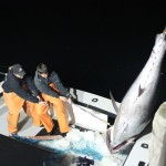 A wicked bad idear: National Geographic hunts bluefin tuna for entertainment