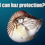 Will marine conservation miss out at the next CITES meeting?