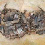 Preserved in the Act and Fossilized Turtle Whoopie