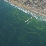 What is the green sea foam off La Jolla Shores (San Diego)?