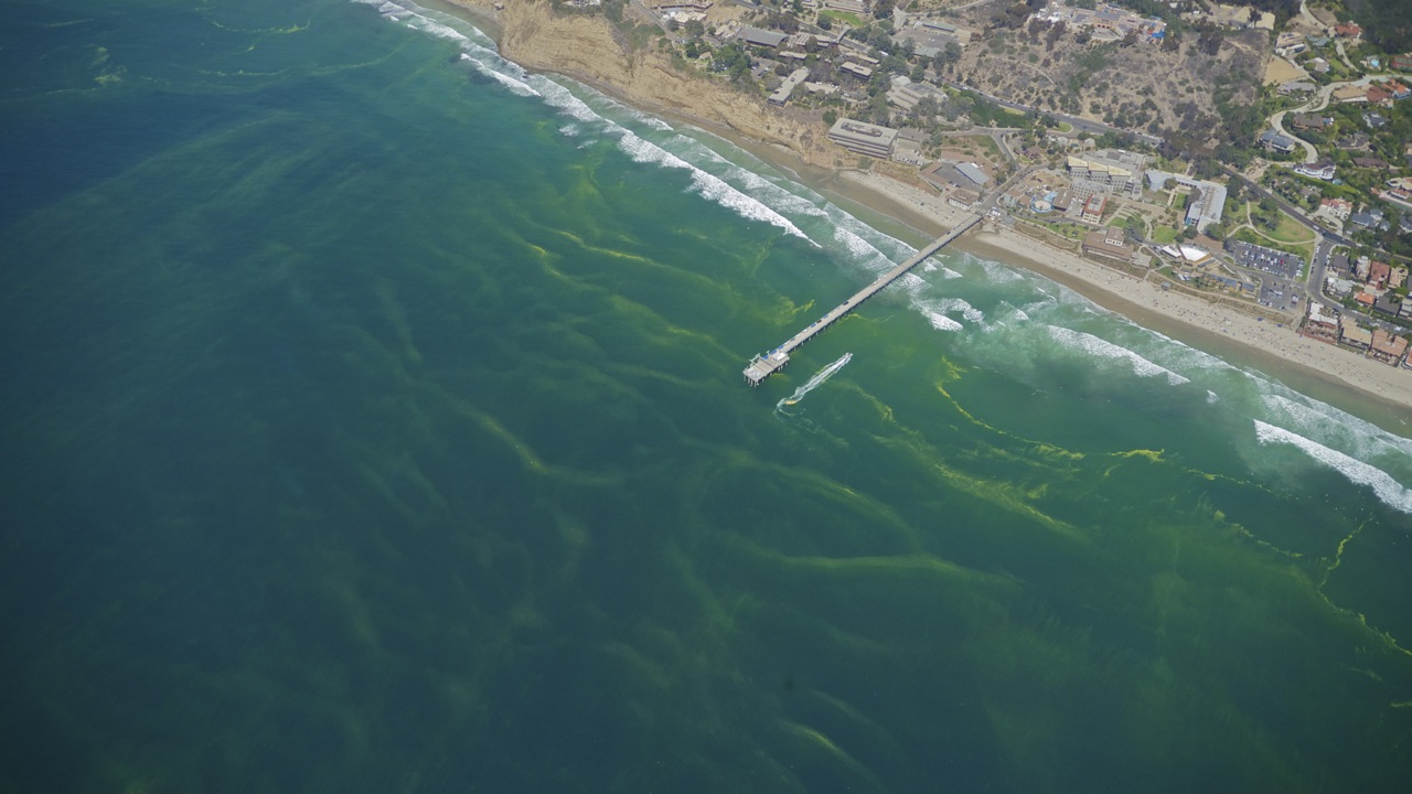 Photo of streaks of green foam off Scripps pier