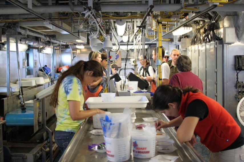 The science crew sorting the catch in the Pisces wet lab