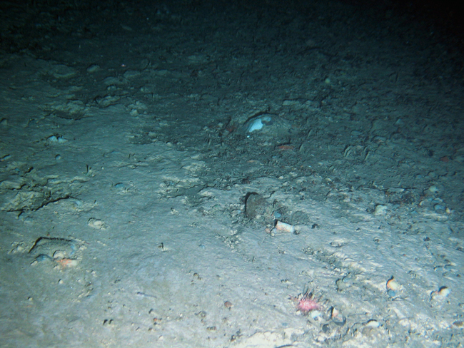 Photo showing the edge of the cuttings pile at Laggan in the Faroe-Shetland Channel. The cuttings are at the bottom of the picture and the natural seabed at the top.