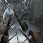 How horseshoe crabs may have saved your life