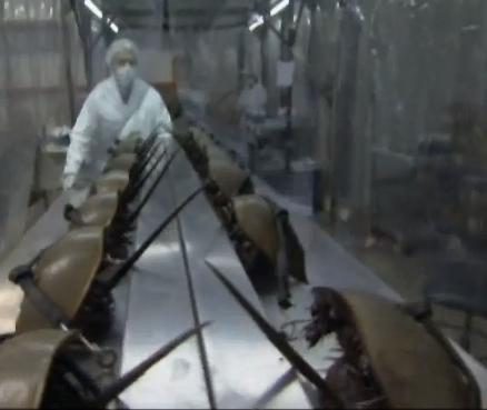 Researcher prepares horseshoe crabs for bleeding. Screen cap from video at the end of this post.