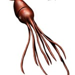 How Big Is A Colossal Squid Really?