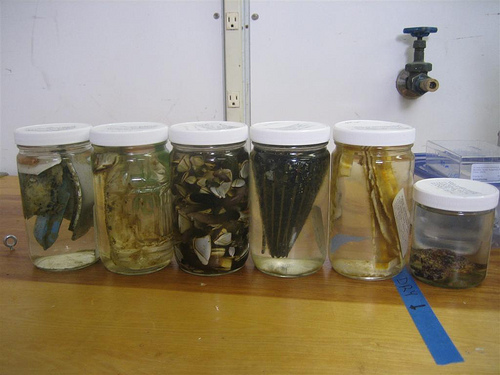My jars of samples. The original jar o' barnacles is in the middle.