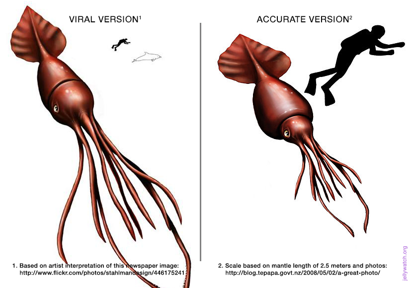 How Big Is A Colossal Squid Really? | Deep Sea News