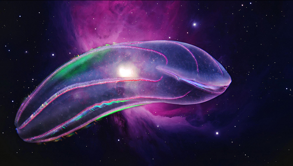 Comb jelly in space! By Alexander Semenov. Used with permission.