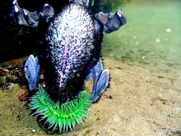 A day-glo anemone devouring a fledgling cormorrant looks postively Seussian