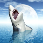 What ate a 3 meter long Great White? Probably a Wereshark