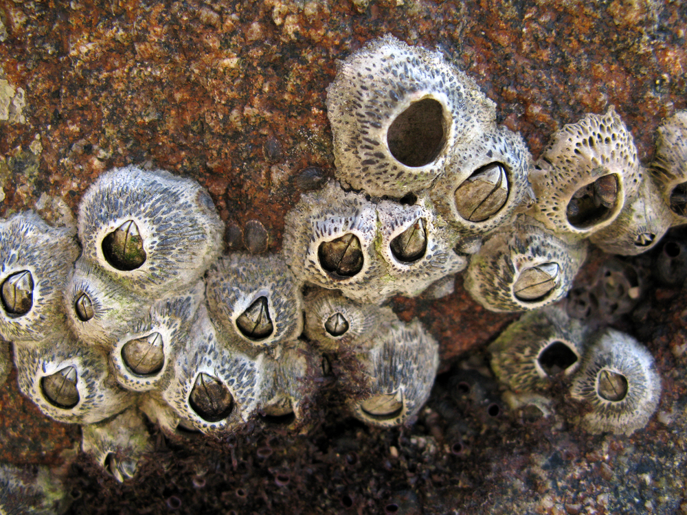 the all seeing all knowing eye of upside down barnacles deep sea