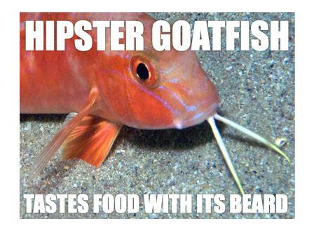 Goatfish hipster compressed