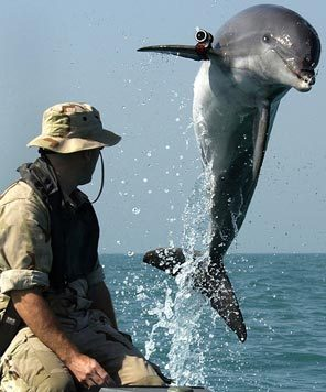 No seaside vacation is safe from dolphins.