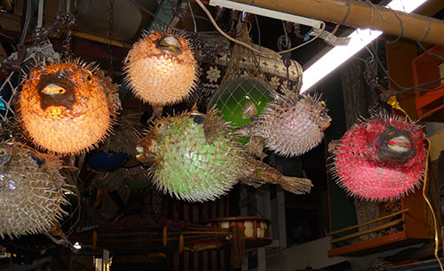 Timeless and tasteless: the permanence of the Porcupine Fish hanging lamp. Oceanic Arts, California.