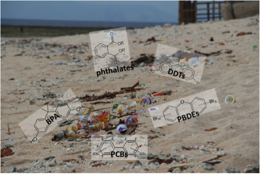 Photo of beach and chemical diagrams.