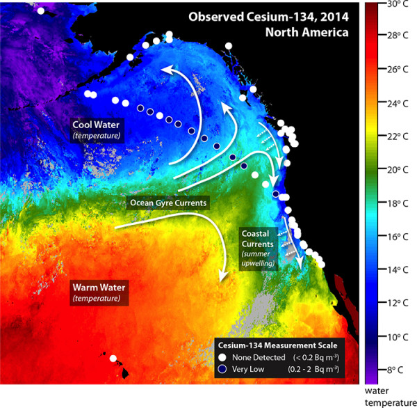 All those blue circles, where just detectable amounts of Fukushima radiation have been measured in 2014. All those white circles are where Cesium-134 from Fukushima has not been detected. [source: http://www.whoi.edu/news-release/Fukushima-detection]