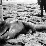 Lies, Damned Lies, and Cryptozoology