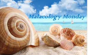 MM Malacology Monday