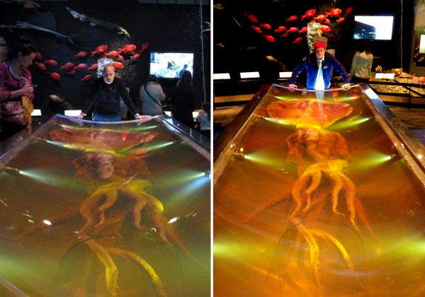 Who rocks the Colossal Squid better? Posed with the 2007 in the Te Papa Museum is Deep Sea News creator and kahuna Dr. Craig R. McClain (left) and DSN new kid and Southern Hemisphere explorer Dr. Douglas J. Long